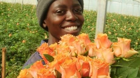 Panocal roos Arancio