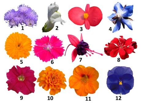 eetbare bloemen zijn gezond