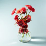 Colourful mini Gerbera varieties for Mother's Day