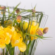 Freesia standing in tall grass close-up