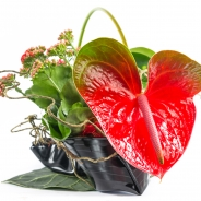 Kalanchoe +Anthurium close