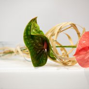Quick and easy design with Sonate and Pistache cut Anthuriums from Fiore Anthuriums - photo Nils van Houts