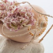 Dianthus in a seashell close up