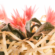 Bromeliad by Flower Factor