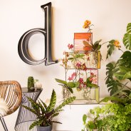 orchids urban jungle style - design Chantal Vollenbroek