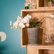 orchids urban jungle style - Phalaenopsis 'Artisto' from Opti-flor