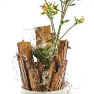Plant +hout