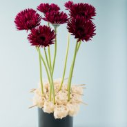Elegant and contrasting mini Gerbera design