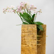 Phalaenopsis plant arrangement with an Opti-flor orchid - photo Nils van Houts