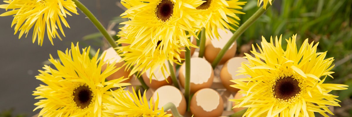 Fast Easter flowers with Gerberas and eggs