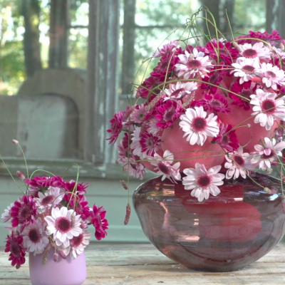 Pink mums for mom