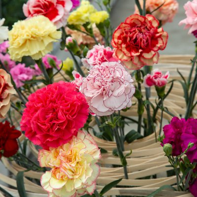 Colourful #TrendyDianthus arrangement