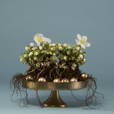 Subtle Christmas arrangement with Hellebore 'Verboom Beauty'