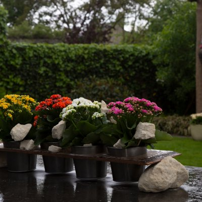 Garden table decoration with Kalanchoë