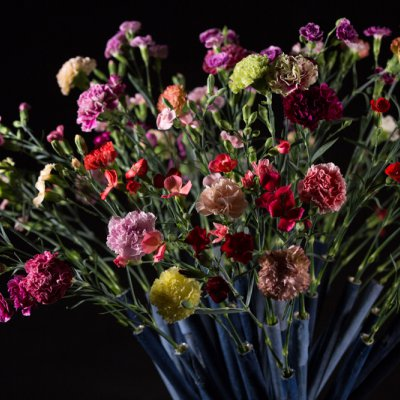 Dianthus hand-tied bouquet 2.0