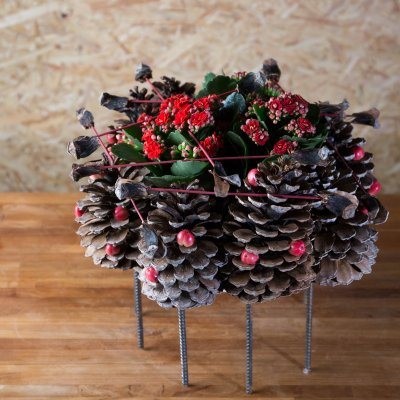 Kalanchoe and pine cones