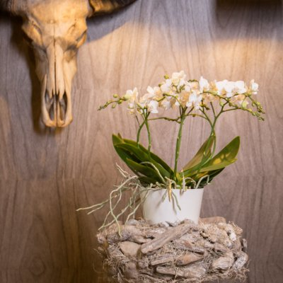 Orchids on a pedestal