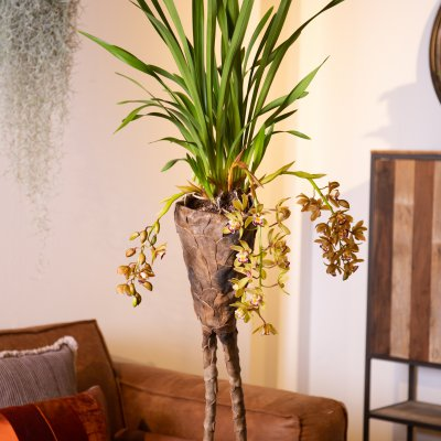 Cool Cascade Cymbidium Argiro arrangement