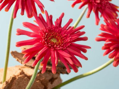 Simple Mother's Day idea with mini Gerberas