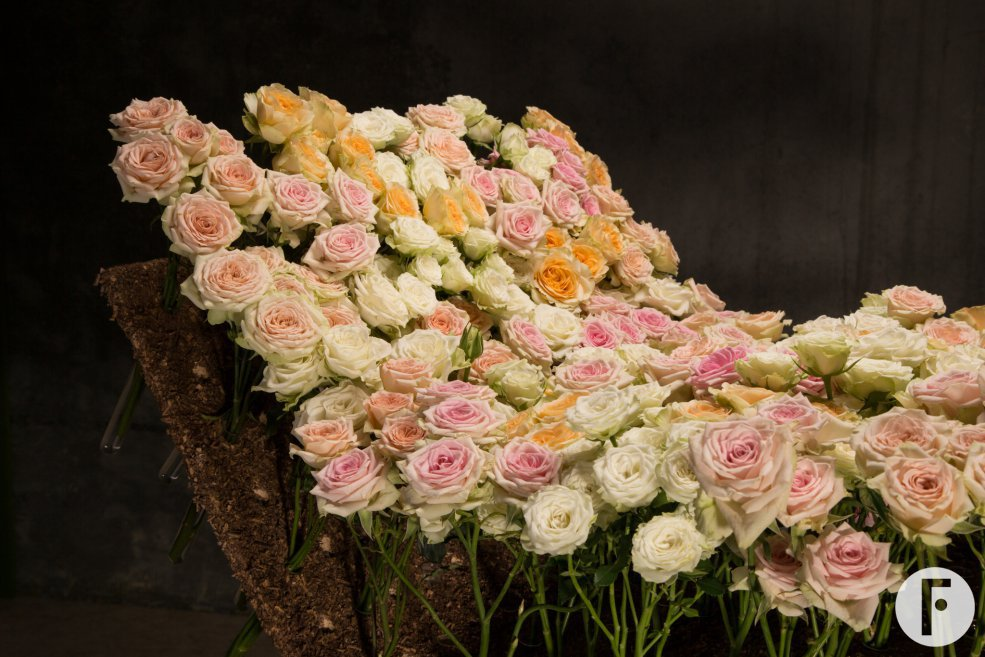 bed of spray roses 3
