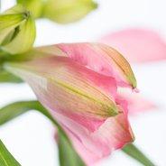 Flowers Often Used In Floral Designs Flower Factor