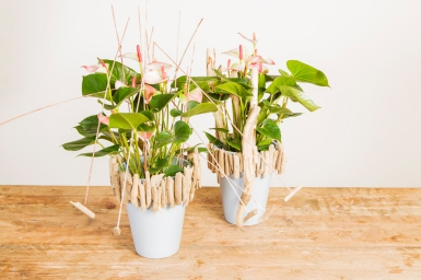 Great design with Anthurium plants