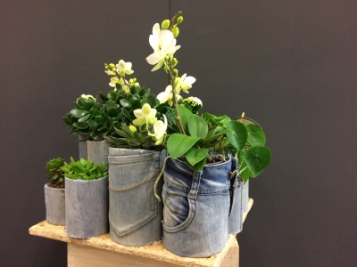 Denim Drift plant collection - High end
