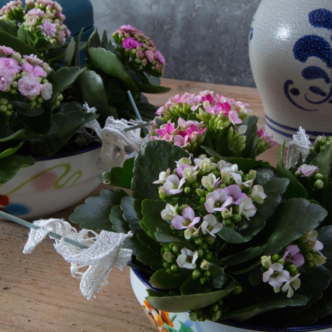 Kalanchoe duo sfeer close