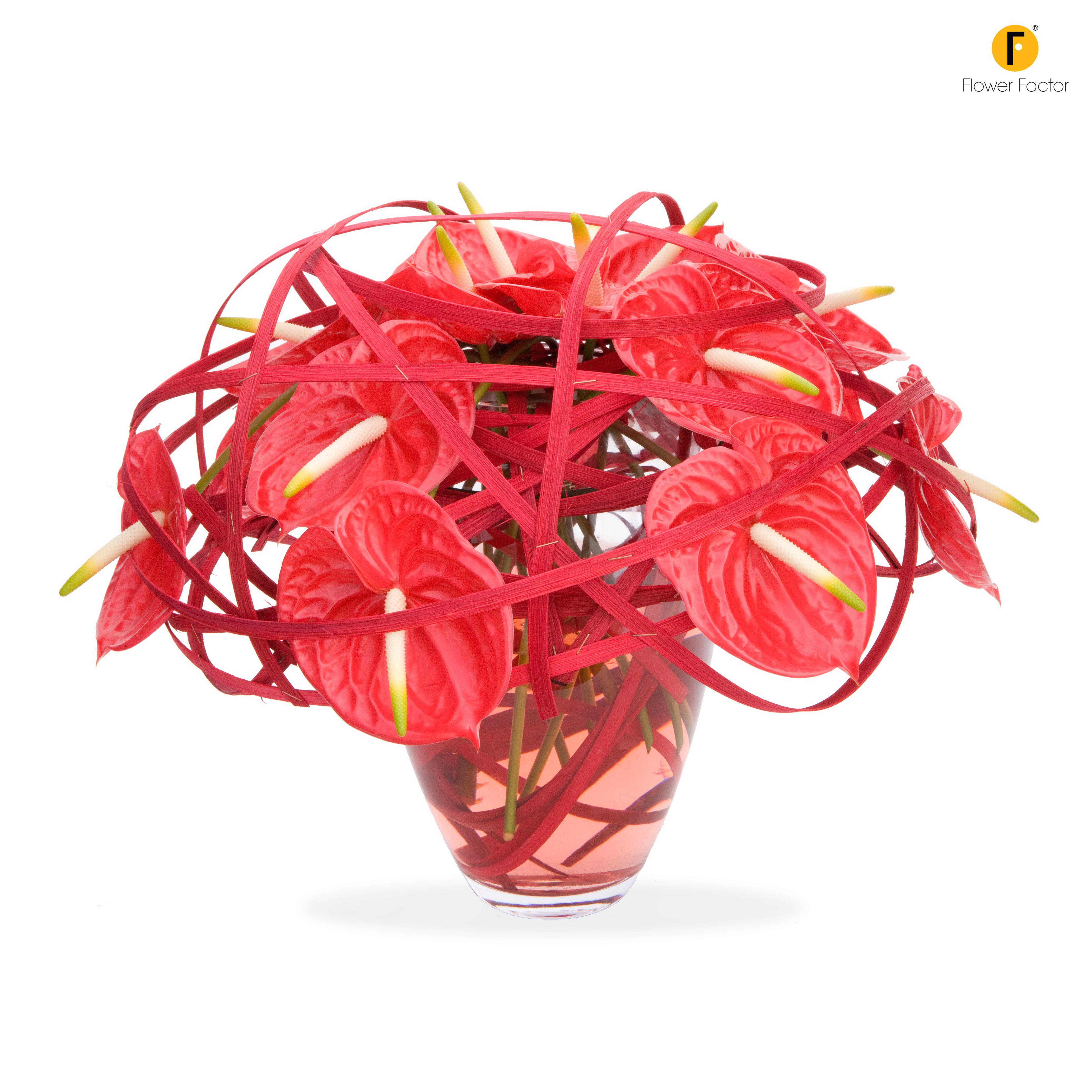 A Striking Anthurium Bouquet Flower Factor