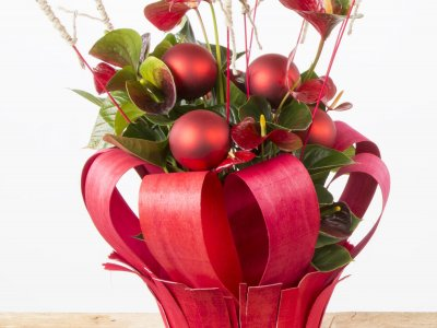 Potted arrangement with Anthuriums