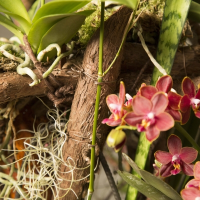 close up Secret Orchid Garden design by Klaus Wagener