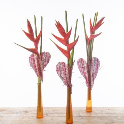 Heliconia Hearts
