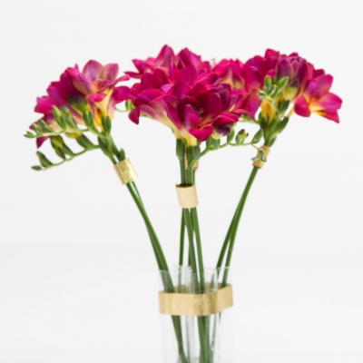 Hot pink Freesia with golden details