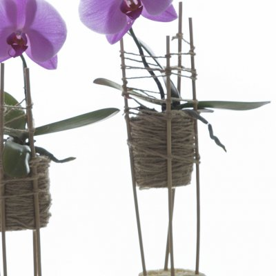 Idea with 'Singalo' orchids
