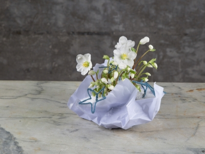 Hellebore in paper container