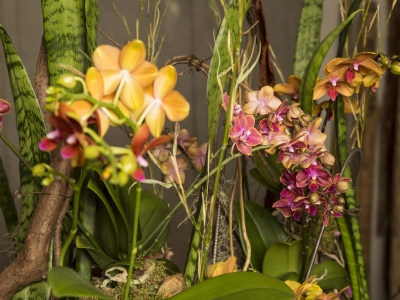 Secret Orchid Garden by Klaus Wagener - close up