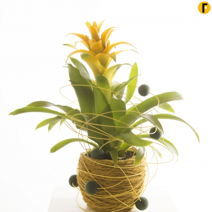 photos of inspiring plant arrangements | flower factor
