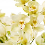Scholte Orchidee Eerlisue Paddy close up bloem af