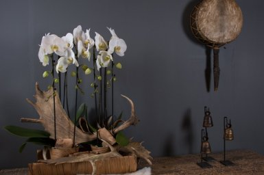 Orchids in your interior