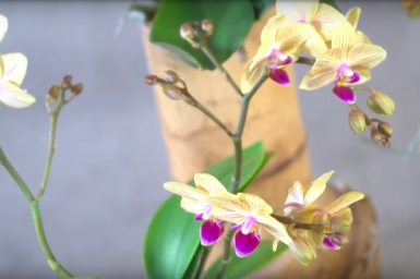 An urban jungle design with orchids
