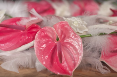 Soft Anthurium and feather wreath