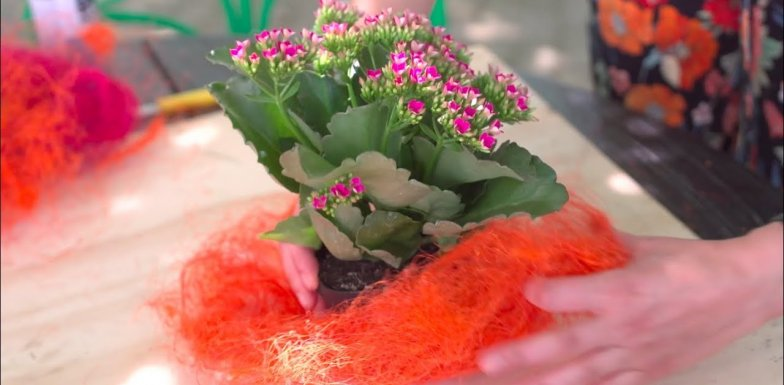 a colourful Kalanchoe table setting