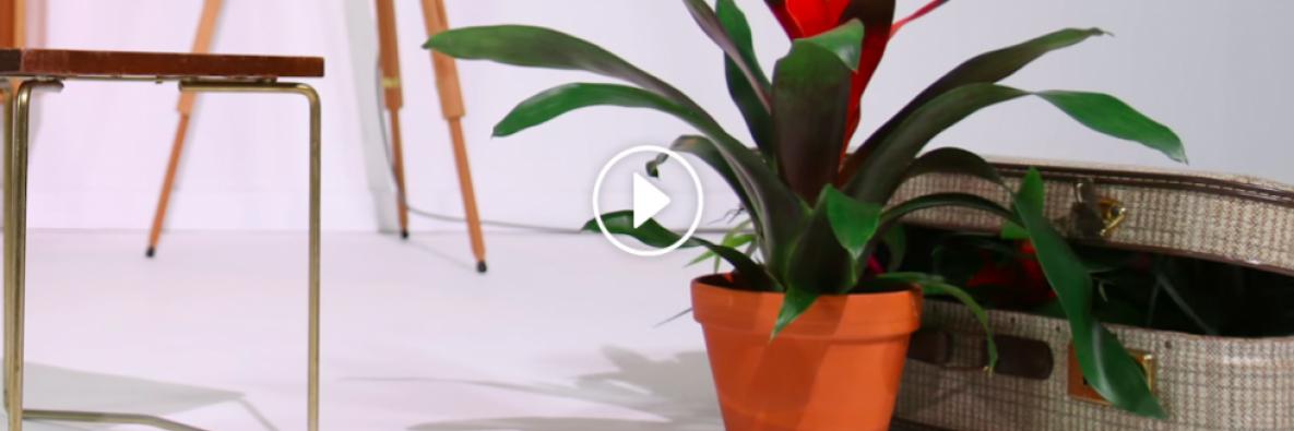 stop motion video: Invite the whole Bromeliad family