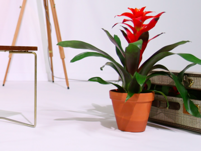 Meet the whole Bromeliad family!